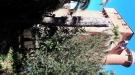 actuacions en l'arbrat i arbustos