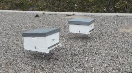 Els pol·linitzadors i l'apicultura a les ciutats com a valors per la biodiversitat