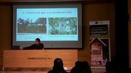Sessió 2: Solucions basades en la natura: actuacions en l'arbrat i arbustos