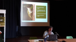 Sessió 3: Estructures per la fauna. Del disseny al manteniment i seguiment